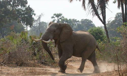 In pics: animals at Gonarezhou National Park in Zimbabwe