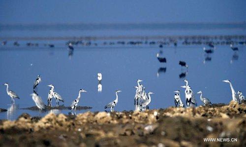 Migratory birds are seen at a lake area in Yongxiu County, east China's Jiangxi Province, Dec. 16, 2016. Photo: Xinhua