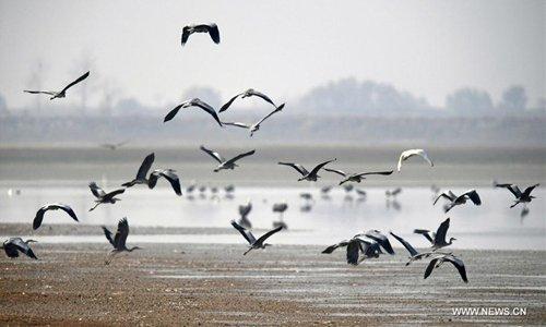 Migratory birds fly over a lake in Yongxiu County, east China's Jiangxi Province, Dec. 16, 2016. Photo: Xinhua