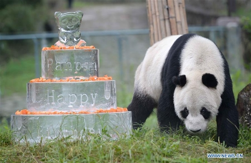 Photo taken on Sept. 21, 2015 shows Pan Pan at the Dujiangyan base of the China Conservation and Research Center for Giant Panda in southwest China's Sichuan Province. Pan Pan, the world's oldest male panda, died at 31 in southwest China's Sichuan Province Wednesday morning.(Xinhua/Xue Yubin)