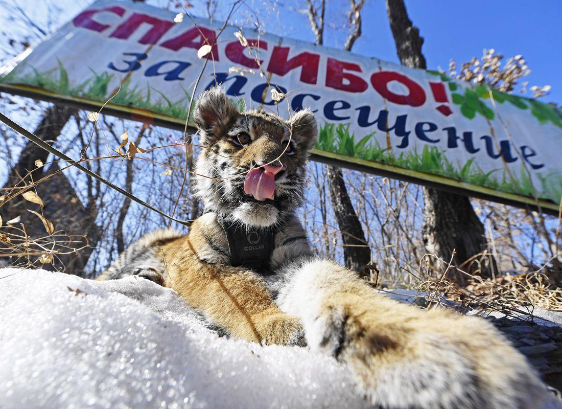 Safari Park in Shkotovo: a corner of unity with nature 67