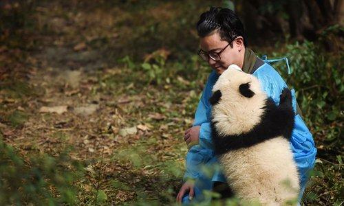 'Panda Dad' China's latest Internet celebrity