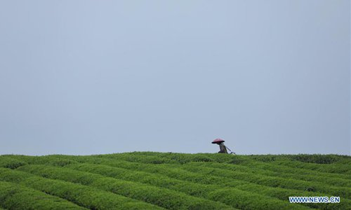A Tea Farmer Picks Tea Leaves At The Tea Garden In Yongxing Township Of  Meitan, Southwest Chinau0027s Guizhou Province, April 11, 2018. (Xinhua/Liu Xu)