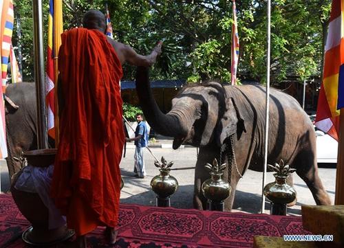 Elephants gather to take part in annual Buddhist Navam procession in Sri Lanka