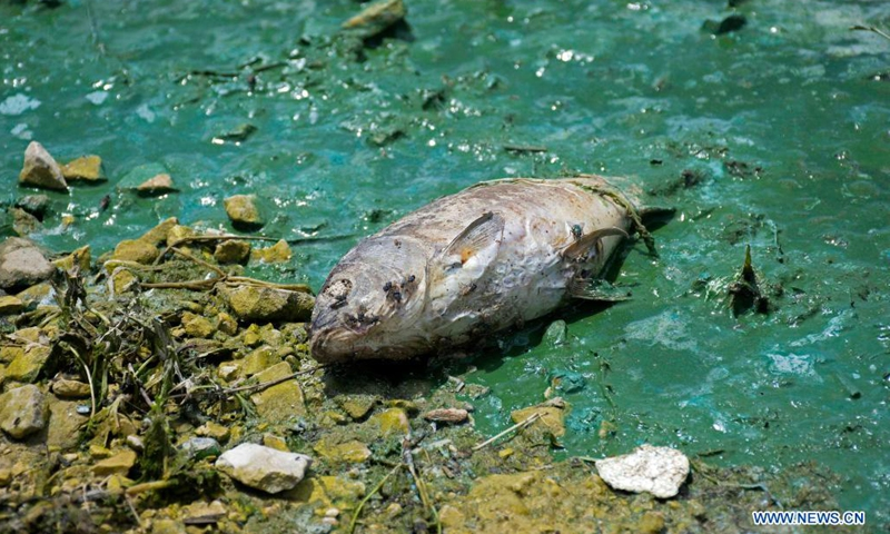 A dead fish is seen at the Qaraoun lake in Bekaa, Lebanon, on May 7, 2021. A large number of dead fish have been recently washed ashore at the lake. The massive fish deaths are believed to be caused by untreated water discharged by dozens of factories into the Litani River, which flows into Lake Qaraoun, an artificial lake created by a dam on the longest river in Lebanon.(Photo: Xinhua)