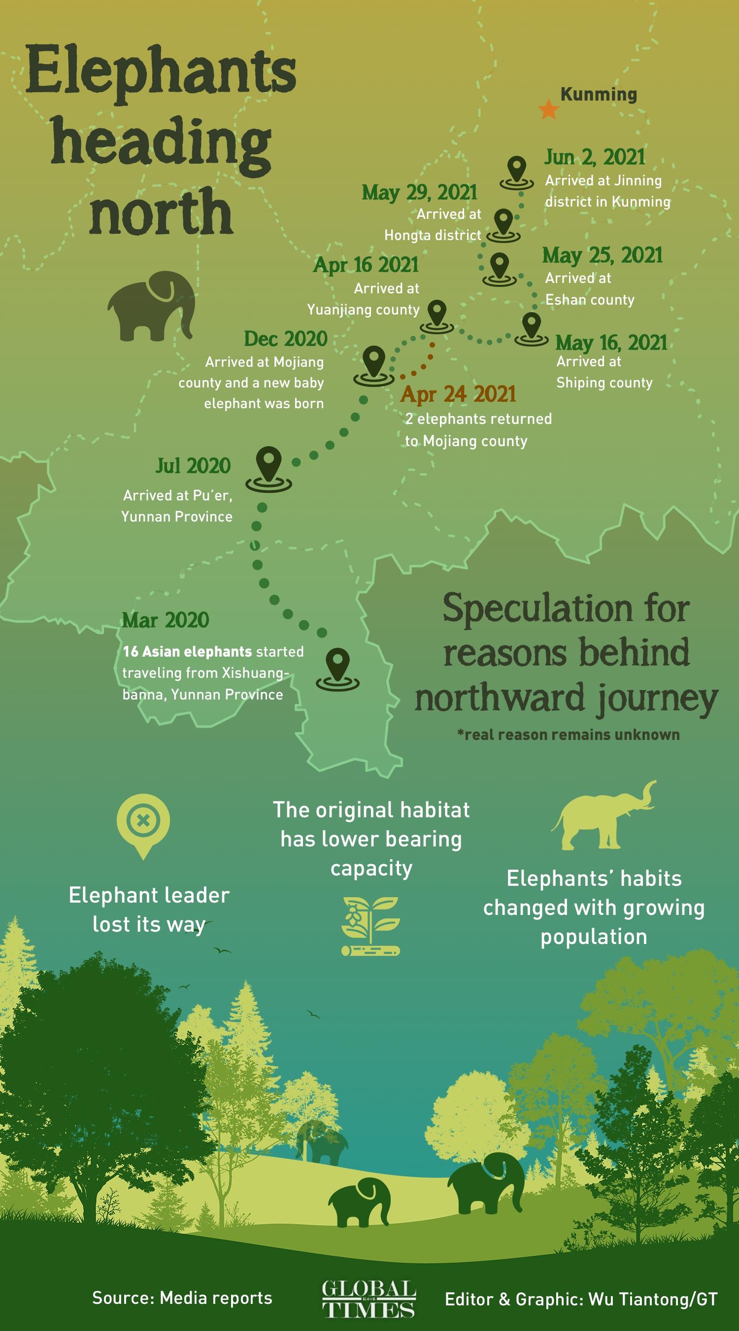 Elephants heading north Infographic: Wu Tiantong/GT