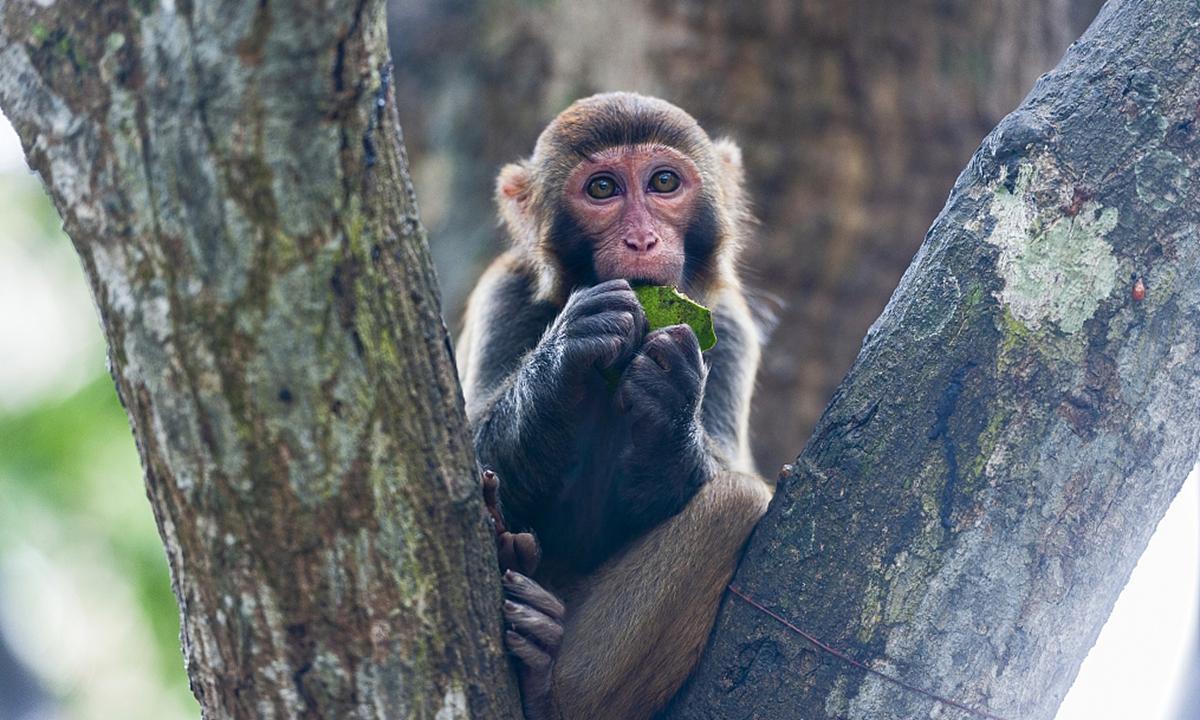Monkey Photo:VCG