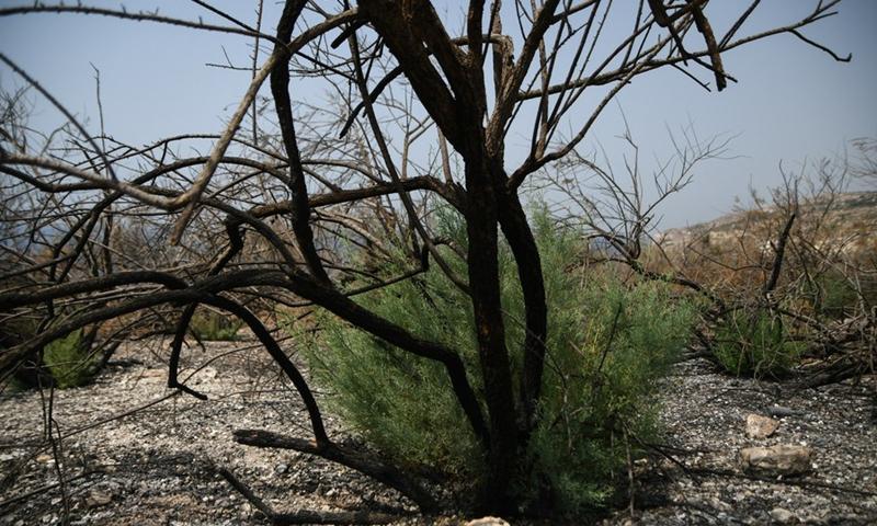 Η φωτογραφία που τραβήχτηκε στις 12 Αυγούστου 2021 δείχνει καμένους θάμνους μετά από δασική πυρκαγιά που προκλήθηκε από υψηλή θερμοκρασία στο Siggiewi της Μάλτας.  (Φωτογραφία: Xinhua)