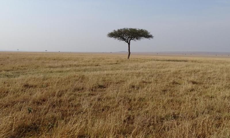 Photo shows the brown grassland at Maasai Mara National Reserve in southwestern Kenya, Aug. 30, 2021. (Photo: Xinhua)