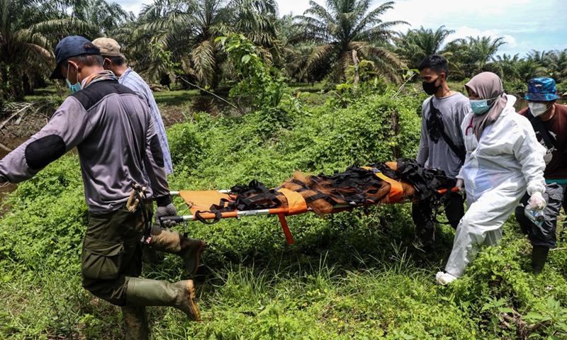 Seorang dokter hewan dan relawan membawa orangutan sumatera liar (Pongo Abelii) jantan setelah ditangkap untuk diselamatkan di desa Summer Bakti, kabupaten Nagan Raya, Aceh, Indonesia.  25 September 2021. (Foto: Xinhua)