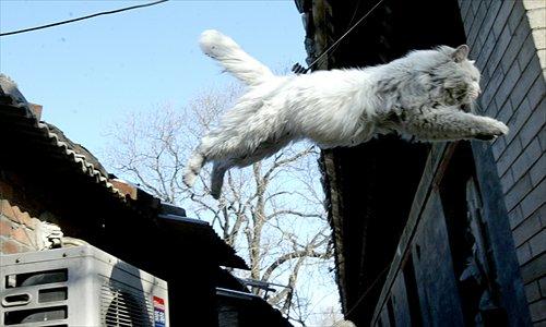 'Cat-pigeon war' annoys residents
