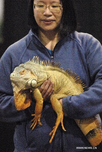 A visitor holds an iguana at the annual Pet Expo 2013 in Vancouver, Canada, on March 10, 2013. Pet Expo is a two-day consumer tradeshow showcasing all types of pets, pet products, service providers, entertainers, clubs and organizations that cater to pets. (Xinhua/Sergei Bachlakov)