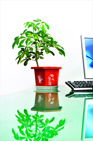 Stalker smog global times for Indoor plants for better air quality