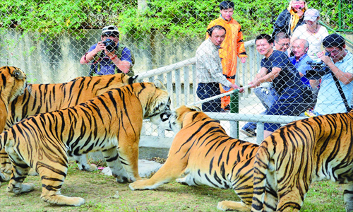 Visitors play tug of war with tigers at a zoo in Wuhan, Hubei Province, on September 30. Photo: CFP