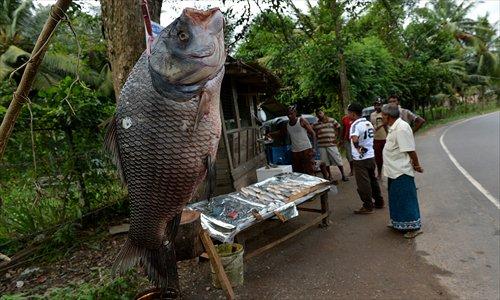 Big fish small growth global times for Sri lanka fishing