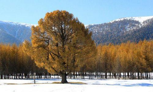 Photo taken on October 11, 2012 shows the autumn scenery of the east Tianshan Mountain in Hami, Northwest China's Xinjiang Uyghur Autonomous Region. Photo: Xinhua