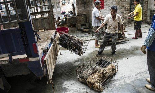 Workers unload dogs from a truck at Binjiang Road in Yulin. The dogs will be butchered before being sent to restaurants. Photo: Li Hao/GT