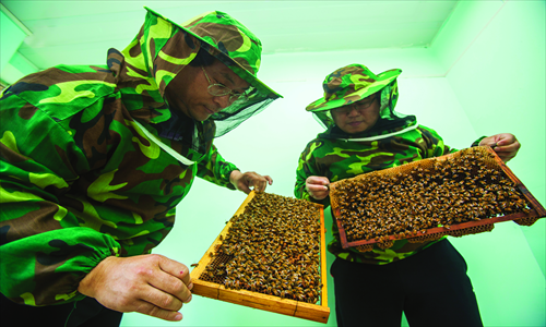 Doctors examine bees kept in beehives.Photo: IC