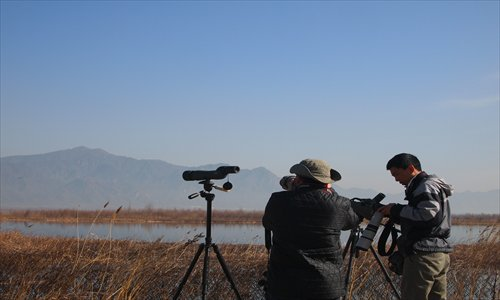 Chinese birdwatchers take photos at Guanting Reservoir in Yanqing county. Photos: Courtesy of Terry Townshend, Jiang Yuxia/GT