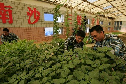 PLA soldiers plant vegetables on Yongshu Reef. Photo: CFP