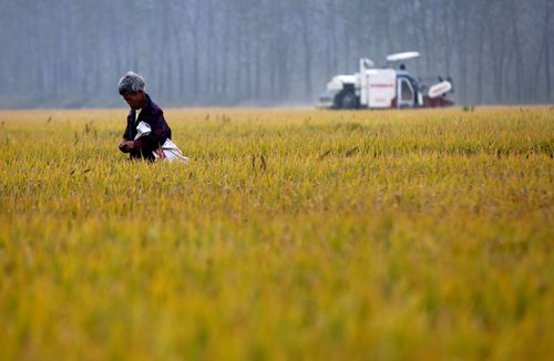 A villager works on farmland in Huai'an, East China's Jiangsu Province in November 2016. Photo: CFP
