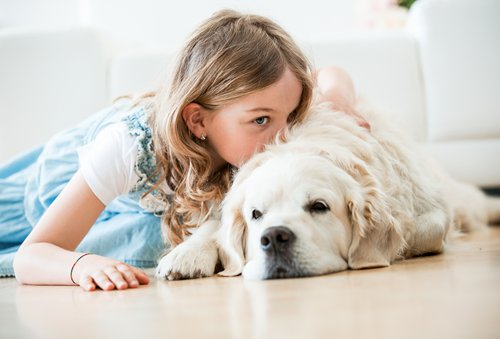 matchmaking for animal lovers