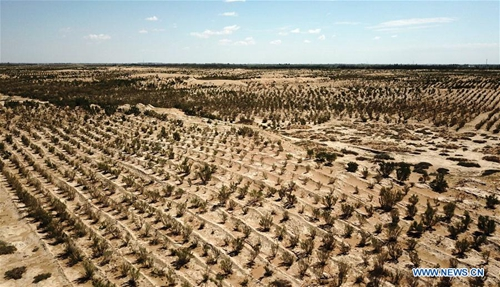 Extensive reforestation in China makes Earth greener