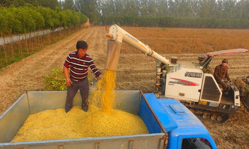 China develops new high-yield soybean variety