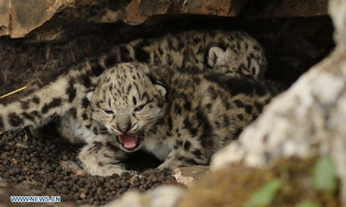 Compensation helps Tibetan herders and snow leopards to coexist  - Global Times