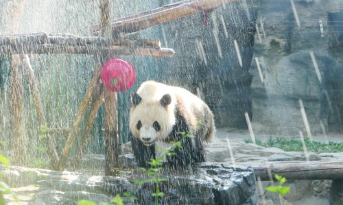 Panda takes cold shower to beat the heat in Beijing - Global Times