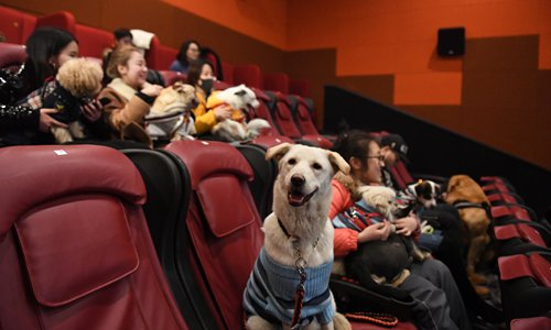 Canine cinema: 100 dogs invited to movie  - Global Times