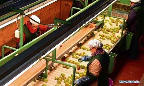 Employees work at fruit factory in San Fernando, Chile - Global Times
