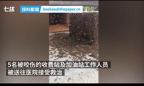 30,000 bees escape from the truck, swarm highway toll station