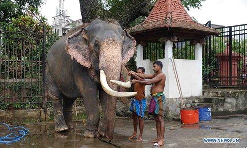 Mahouts bathe elephants ahead of Esala Perahera festival in Sri Lanka