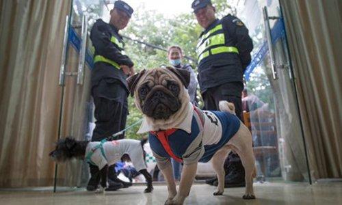 Stray dog mercy killing plan sparks controversy