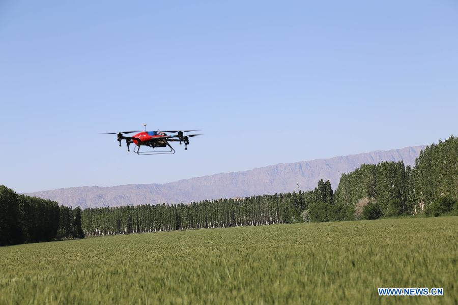 Number of agricultural drones in Xinjiang to exceed 5,000 in 2019