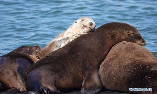 Sea lions sleep together at Fisherman's Wharf in San Francisco