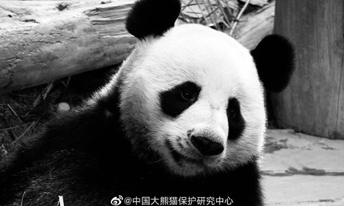 Heart-broken Chinese netizens want Thailand zoo to return panda after mate's death