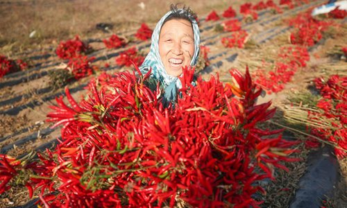 Chili peppers harvested in Changgangzi Village, NE China's Liaoning