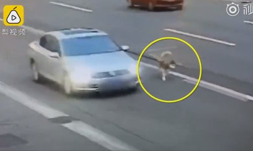 Motorist dries his dog on highway