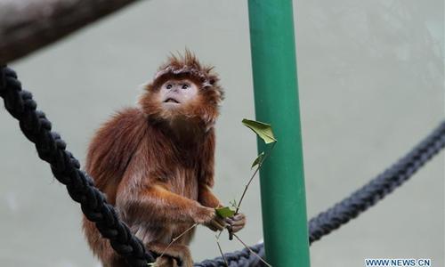 Animals seen at Jerusalem Biblical Zoo