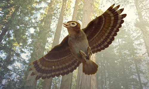 Researchers discover fossilized bird preserved in amber