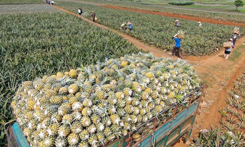 Aerial photo taken on March 27, 2020 shows a truck loaded with pineapples at Hanzhai Village in Xuwen County of Zhanjiang City, south China's Guangdong Province. The harvest season of pineapple here is coming. (Xinhua/Deng Hua)