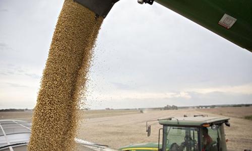 Soybean Photo:Xinhua