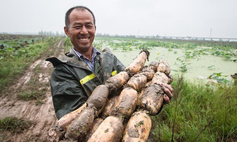 Honghu lotus root