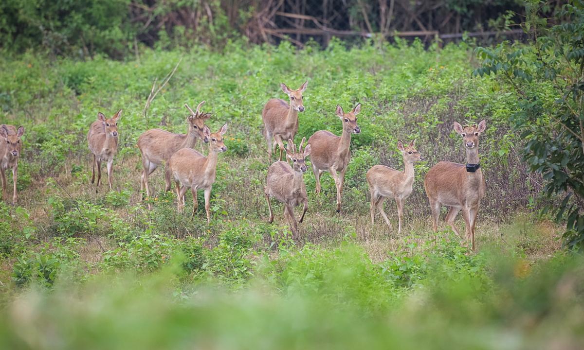 biodiversity Photo:VCG