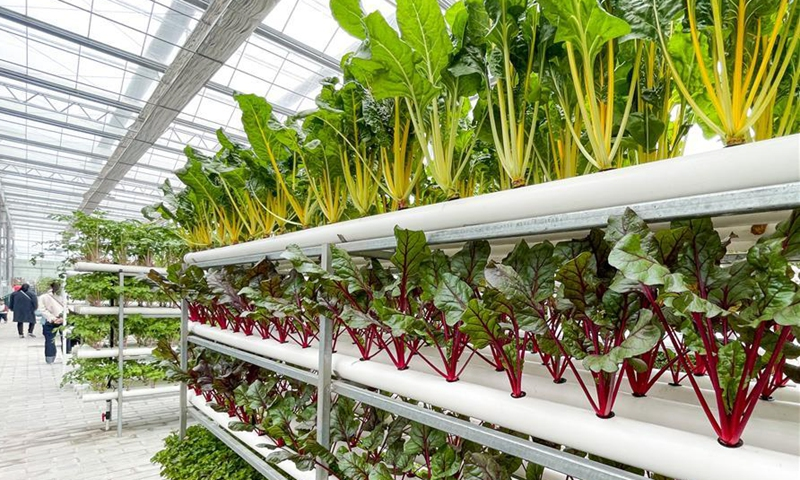 Photo taken on Oct. 27, 2020 shows a hydroponic farm at a modern agricultural park in Tongshan District, Xuzhou, east China's Jiangsu Province. Authorities in Tongshan District have taken steps to optimize the local agricultural sector by combining modern agriculture with urban tourism. Altogether, the district's 300-plus agritourism parks have received some four million visitors in 2019. (Xinhua/Li Bo)