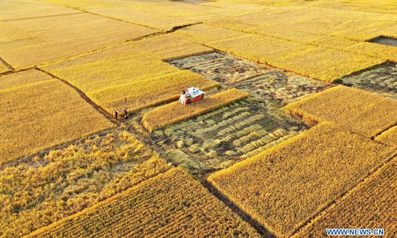 Aerial photo taken on Oct. 18, 2020 shows harvesters operating in rice fields at Jiangzhuang Village of Luanzhou City in north China's Hebei Province. China's grain output reached nearly 670 billion kg in 2020, up 5.65 billion kg, or 0.9 percent, from last year, the National Bureau of Statistics (NBS) said on Thursday. This marks the sixth consecutive year that the country's total grain production has exceeded 650 billion kg. The bumper harvest comes despite disrupted farming as a result of the COVID-19 epidemic, which has been held in check thanks to efforts to ensure the transportation of agricultural materials and strengthen farming management.Photo:Xinhua