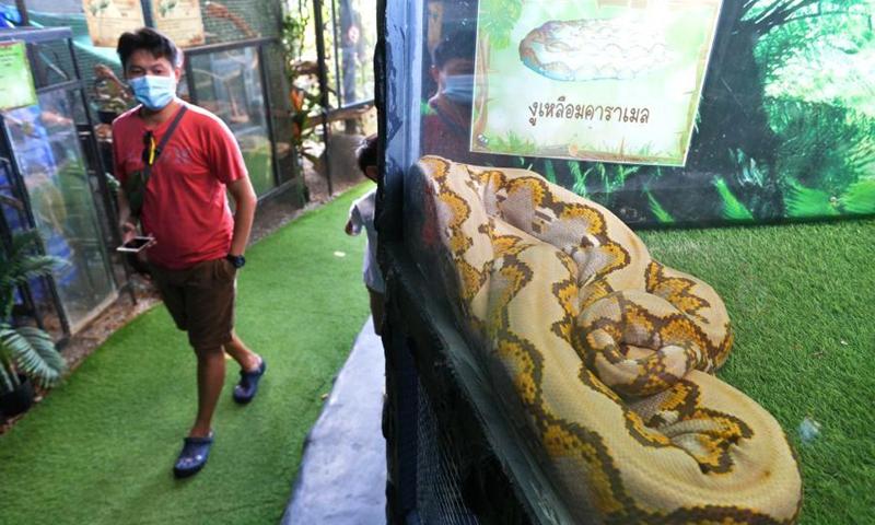 A tourist looks at a snake at Monsters aquarium in Chonburi province, Thailand, Dec. 12, 2020. (Xinhua/Rachen Sageamsak)