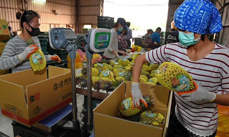 Farmers pack pineapples in Dashu District of Kaohsiung, southeast China's Taiwan, on March 13, 2019. Pineapples in Dashu District of Kaohsiung have entered harvest season. (Xinhua/Zhang Guojun)
